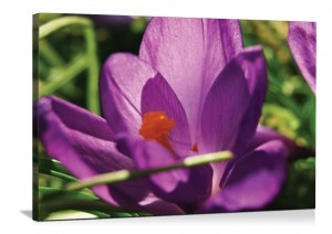 Floral photo on canvas